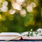 Image of open book and dandelion