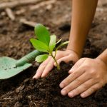 Image Child Hands Planting in Garden