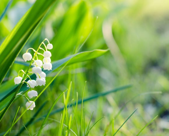 May 2019 — He is the Lily of the Valley